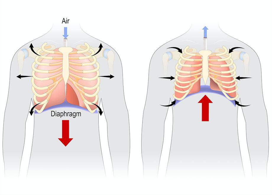 腹式呼吸のイメージ図